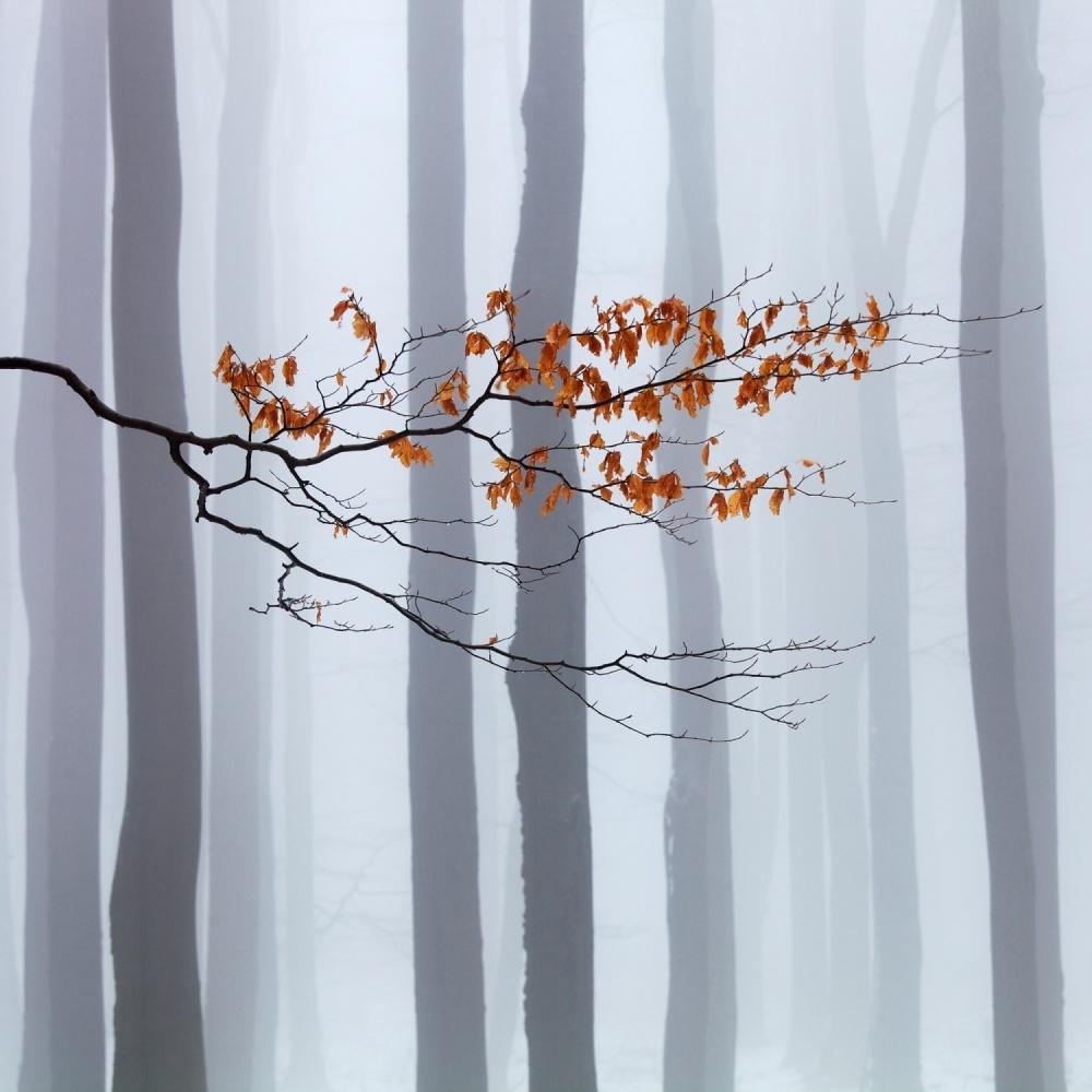 صبر برای زمستان عکس برتر Martin Rak