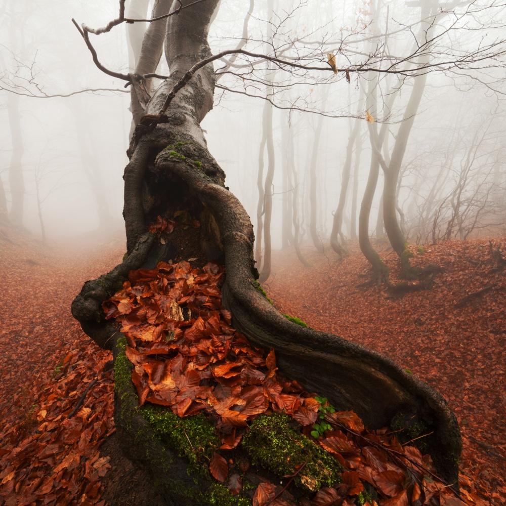درخت باستانی از مارتین راک