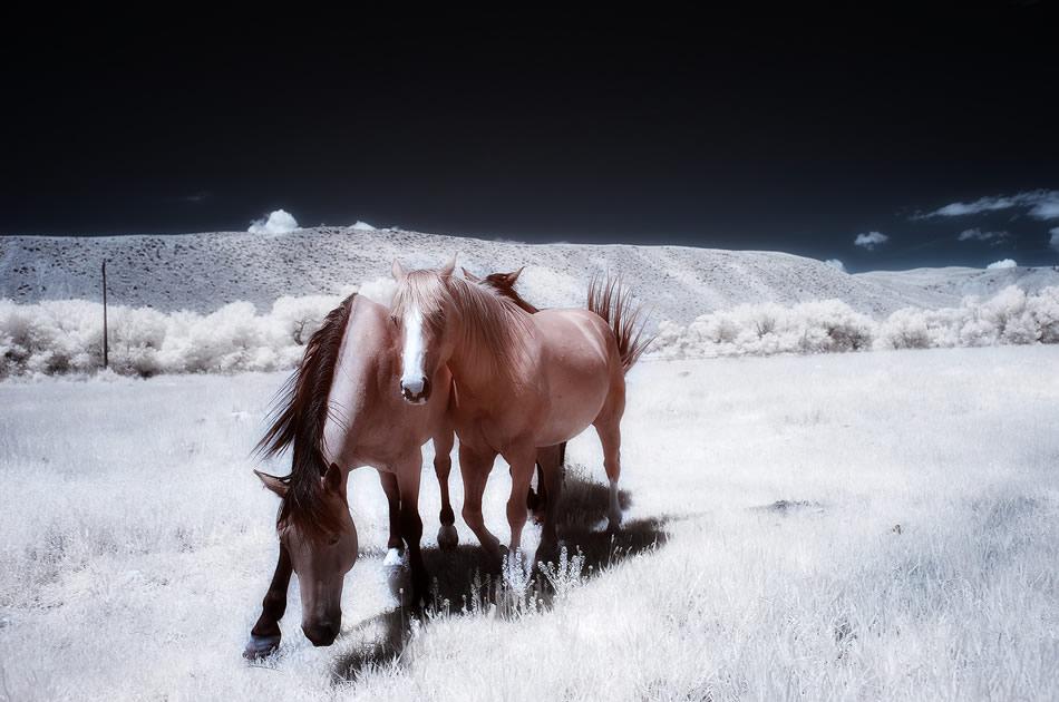استفاده از سوژهای غیر از برف در هنگام عکاسی از زمستان