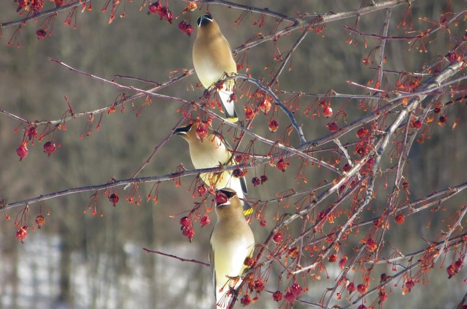 افزودن رنگ به تصاویر در هنگام عکاسی از زمستان