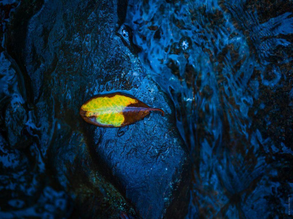 جستوجو برای استفاده از رنگهای مکمل در عکاسی از پاییز
