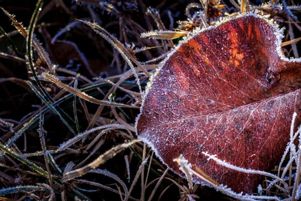 استفاده از پنل HSL در عکاسی از رنگ های پاییزی