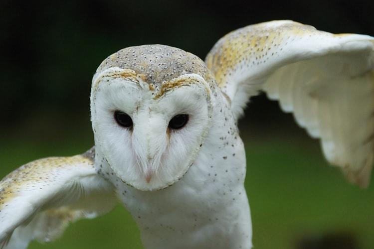 فوکوس خودکار دوربین برای عکاسی حیات وحش